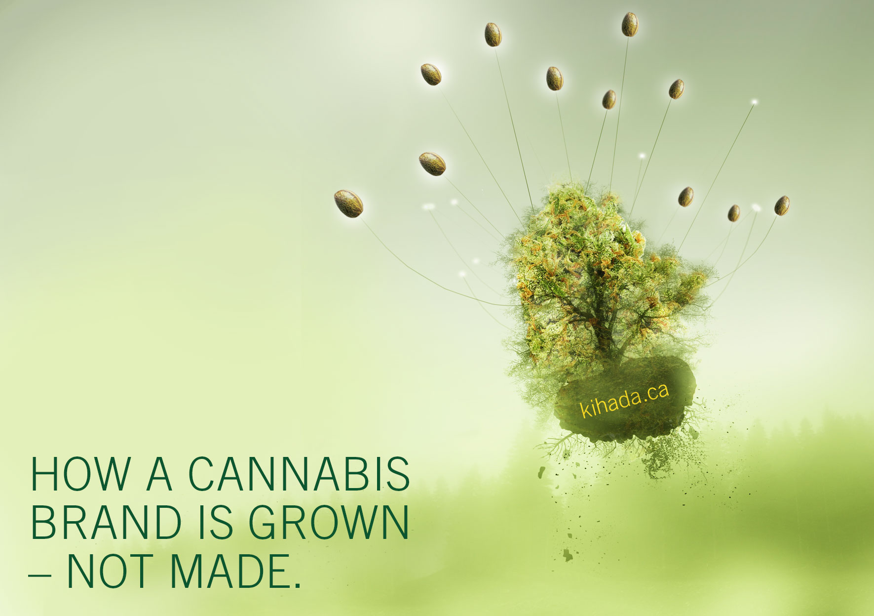 How a cannabis brand is grown not made